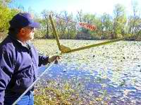 Lake Weed Elimination